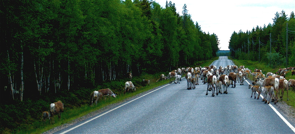 Reindeer_road_blockroad